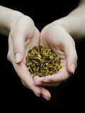 Handful of Pumpkin Seeds