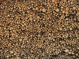 Pulp Wood Stacked in Processing Yard  British Columbia  Canada