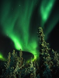 Aurora Borealis or Northern Lights  Yukon