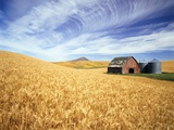 Wheat Field Surrounding Barn
