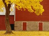 Autumn Tree by Red Barn Papier Photo par Bob Krist