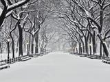 Central Park en hiver, New York Papier Photo par Rudy Sulgan