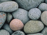 Detail of Pebbles on Long Island  Nova Scotia  Canada