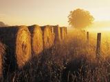 Misty Morning  Farmland and Wheat Straw Rolls  Near St Adolphe  Manitoba  Canada