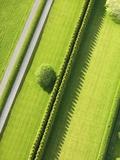 Hedge in The Hamptons Papier Photo par Cameron Davidson