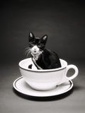 Kitten in a Teacup