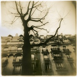 Urban Paris Landscape with Tree