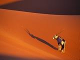 Oryx Antelope on Sossusvlei Sand Dune Papier Photo par Theo Allofs
