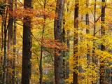 Hardwood Forest in Autumn