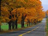 Rural Road in Autumn