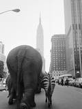 Circus Animals on 33rd Street Papier Photo par Bettmann