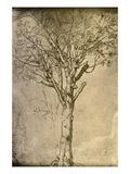 Drawing a Tree by Leonardo da Vinci Giclée par Bettmann