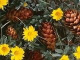 Arrangement of Flowers and Pine Cones