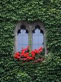 Window of Regensburg Town Hall