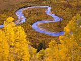 Aspen Trees Before Meandering River