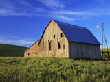 Old Barn and Spring Wheat Field