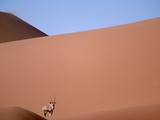 Lone Gemsbok Walking On Sand Dunes