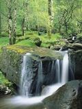 Gougane Barra Forest Park Waterfall