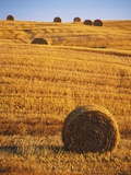 Harvested Fields of Hay