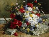 Daisies  Cornflowers and Poppies