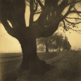 Old Oak Tree on Tree Lined Road