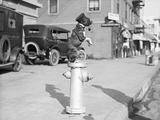Dog Seated on Fire Hydrant