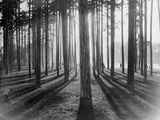 Lights and Shadows Showing Through the Trees Papier Photo par Bettmann