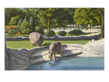 Hippopotamus in Zoo  Detroit  Michigan
