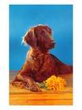 Irish Setter with Flowers