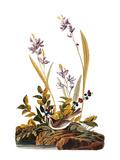 Audubon: Sparrow  1827-38