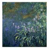 Monet: Irises By The Pond