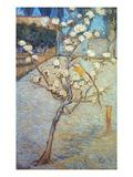 Van Gogh: Peartree  1888