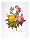 Redoute: Roses  1833