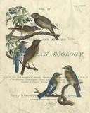 Vintage Ornithology I