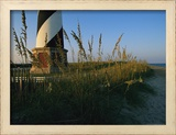Sea Oats Bending in Wind Near the Cape Hatteras Lighthouse