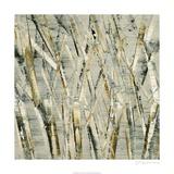 Birches V