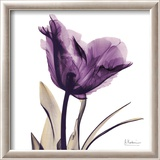 Royal Purple Parrot Tulip