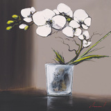 Swirls of White Orchids II