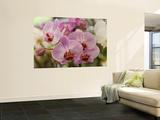 Pink Orchids at Orchid Garden  Kuala Lumpur  Wilayah Persekutuan  Malaysia