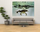 Frog Jumping Into an Aquarium