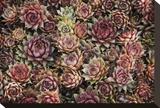 Plantes grasses Tableau sur toile par David Winston