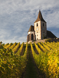 Hunawihr  Alsatian Wine Route  Alsace Region  Haut-Rhin  France