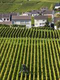 Town and Vineyards  Oger  Champagne Region  Marne  France