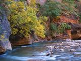 The Virgin River Flows Through the Narrows  Zion National Park  Utah  Usa
