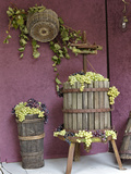 Grape Exhibit on Float  La Festa Dell'Uva  Impruneta  Tuscany  Italy