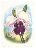 Hawaiian Orchid  Airbrush  c1940s