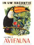 Avifauna Bird Park: Holland c1951