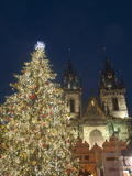 Gothic Tyn Church  Christmas Tree at Twilight in Old Town Square  Stare Mesto  Prague