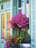 Window With Flowers  France  Europe