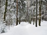 Winter Landscape  Near Koenigsfeld  Black Forest  Baden-Wutttemberg  Germany  Europe